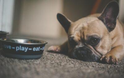 Orijen – hundefoder til ethvert behov