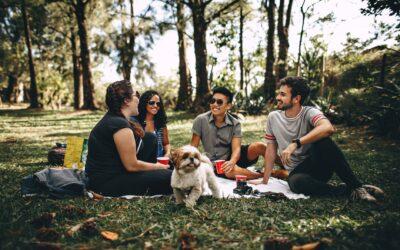 Sådan kommer du godt igennem sommerens picnic-ture