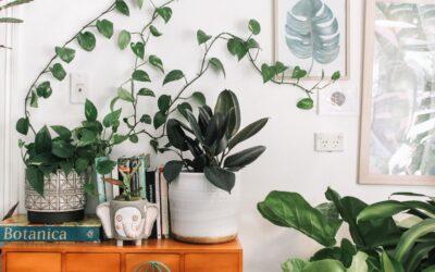 House Doctor – bring den skandinaviske natur med ind i hjemmet